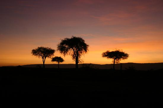Mara Triangle: Sun rise over the Acacia trees