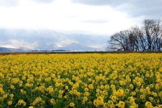 Moriyama, Jepang: なぎさ公園1