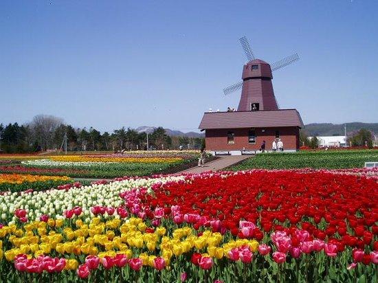 Yubetsu-cho, اليابان: 上湧別チューリップ公園