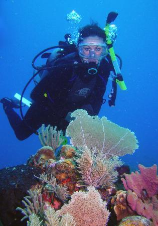 Isla Marisol Resort: Great Diving