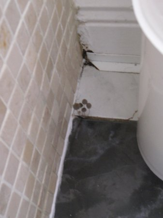 Lusk, Ireland:                                     mushrooms in bathroom