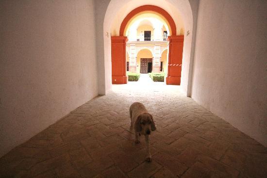 موناستيريو دي سان فرانسيسكو: Haushund