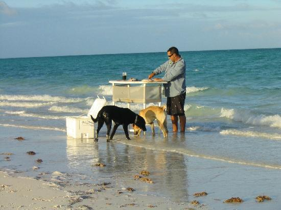 Andros Beach Club: Fish cleaning Andros-Style -- Jesse with the dogs, Duke and Riley