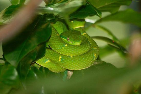 Monteverde, Costa Rica: IMG_2045