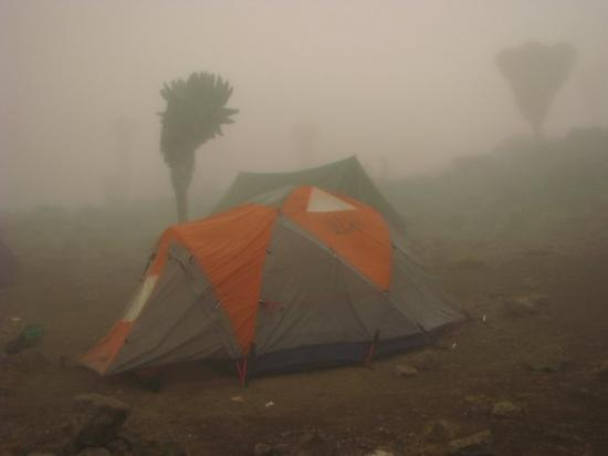 Kilimanjaro National Park, Tanzania:  This is our tent at the Barranco Camp. There was an amazing view of the summit, which looks lik