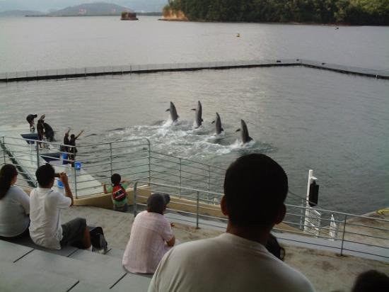 Adventure Beach Waterpark: dolphins walk