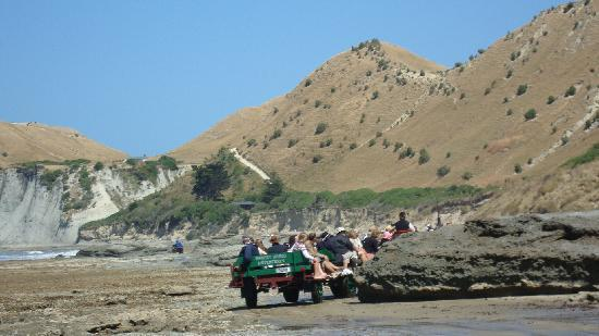 The Crown Hotel Napier: A must do - the Gannets tour to Kidnappes Cove