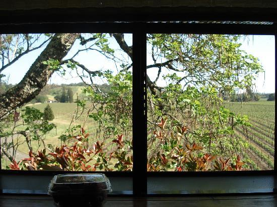 Healdsburg Country Gardens : View from kitchen window