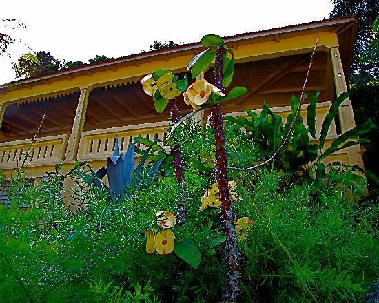 """Casa Grande Mountain Retreat: yellow flowers in bloom in front of """"La Casa Grande"""""""