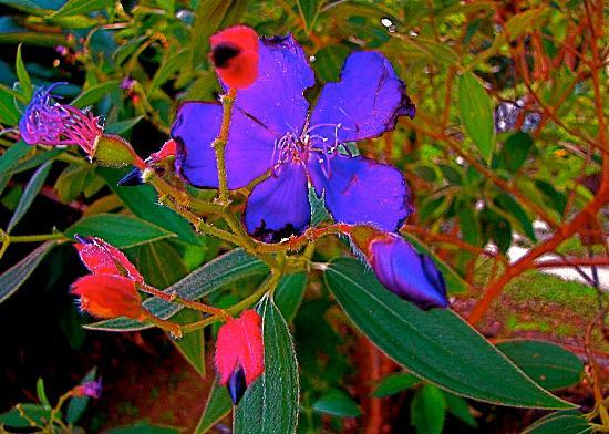 Casa Grande Mountain Retreat: Purple and Red Flowers in bloom at Casa Grande in January