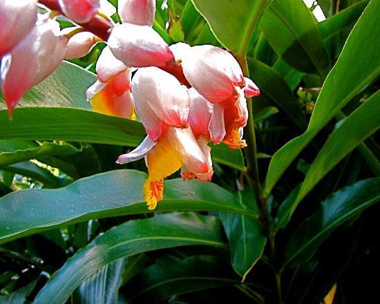 Casa Grande Mountain Retreat: Pink, white & yellow flowers in bloom in January at La Casa Grande