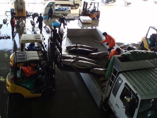 Kesennuma, Japão: マグロの積み込み-A