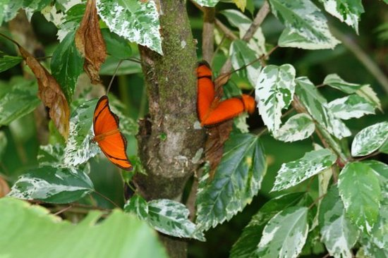 Mariposario Tambopata Photo