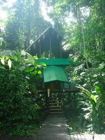 Almonds and Corals Hotel: Luxurious room in the middle of the rain forest!