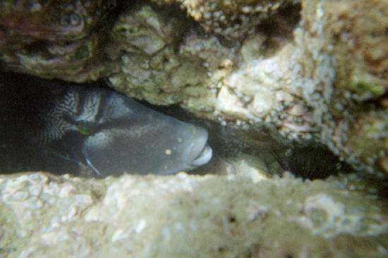 Osa Resort Club : Fish hiding in rocks