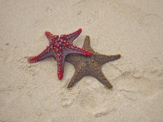 Villa de Coco: Le stelle non stanno solo in cielo