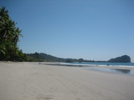 Nature's Beachfront Aparthotel: manuel antonio beach