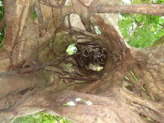 Hotel La Garza: el tour al árbol hueco