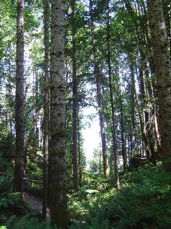 Ocean to Alpine Adventure Lodge: view through the trees