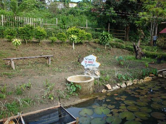 Ue Datu Cottages: ue datu natural spring water