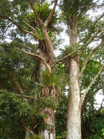 Tealmere Grove B&B: Nature preserve nextdoor