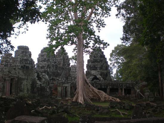 Secrets of Elephants Inn: Angkor Wat