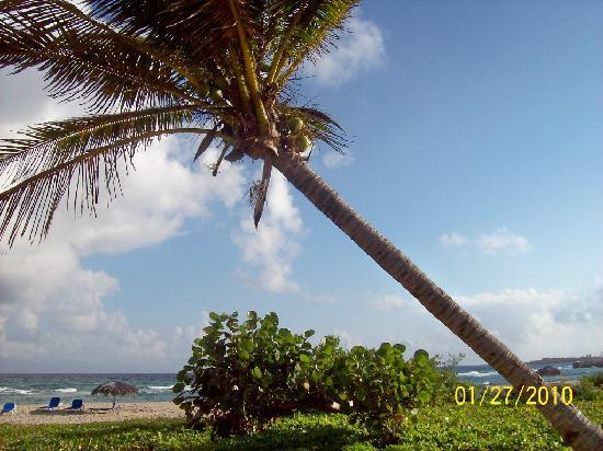 Islazul Villa Don Lino: My room with a view