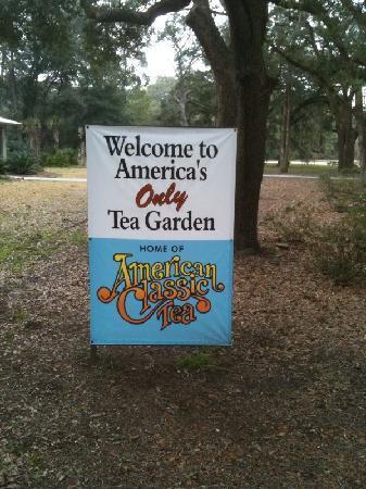 Charleston Tea Plantation Tour Prices