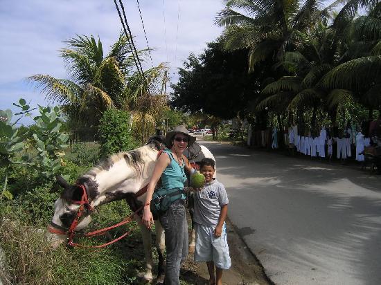 CabaCaribe Horseback Riding: A coconut stop