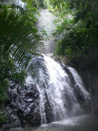 La Ceiba-billede