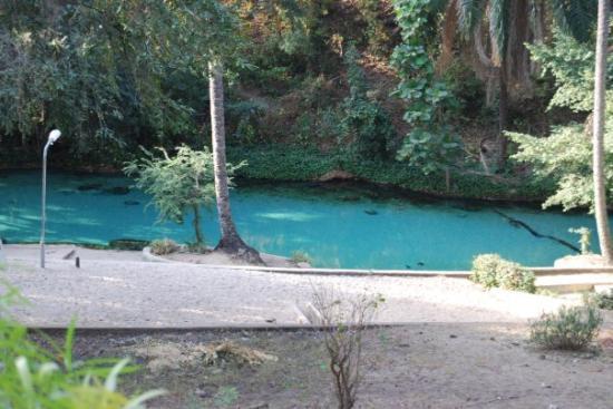 Hot springs at the Yankari Nat...