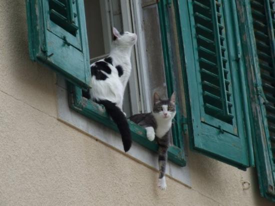 Udine, Italia: gatti curiosi