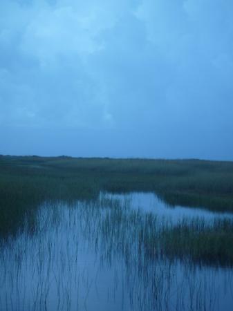 Everglades Hummer Adventures: Everglades (Marécages)