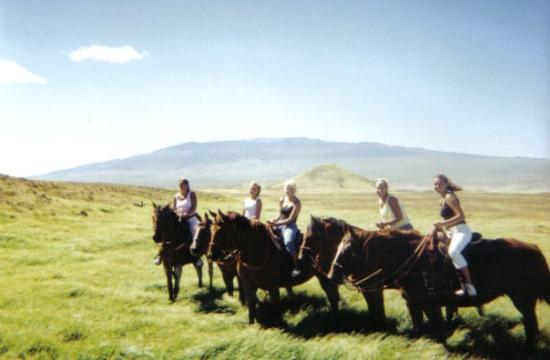 Big Island Horseback Riding Reviews
