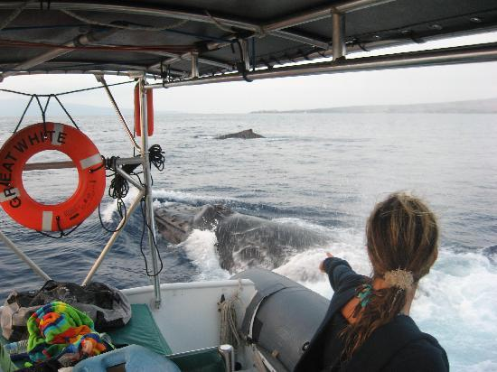 Hawaii Ocean Rafting : Noni points out the whales