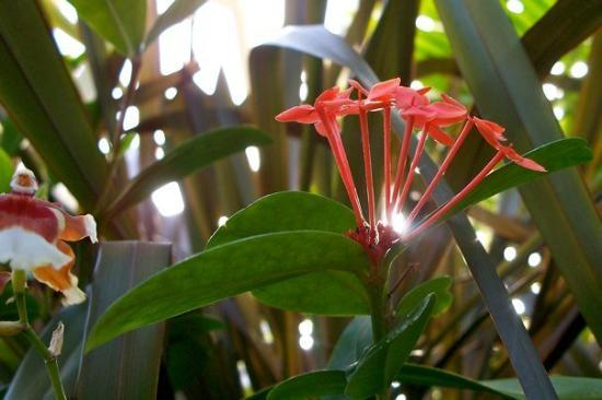 Franklin Park Conservatory and Botanical Gardens: Blooms and Butterflies 056