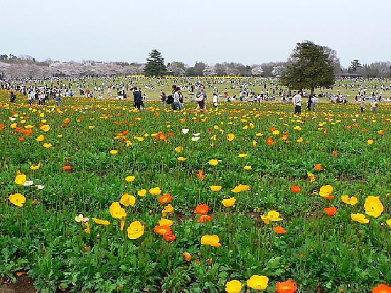 Tachikawa, Japón: 春の昭和記念公園③