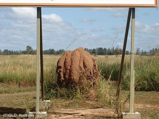 Atherton, Australia: Ant Hills