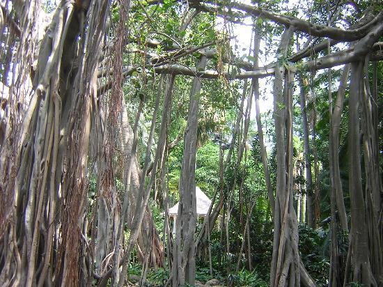 Durban Botanic Gardens: Entrance to Botanical Gardens