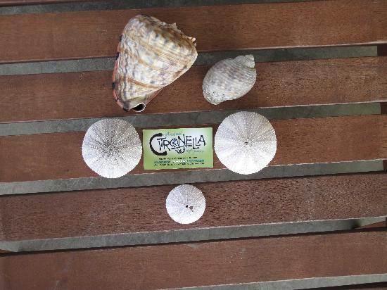 Citronella: I know...don't take the shells from the ea