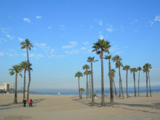 Long Beach CA Palm Trees On The