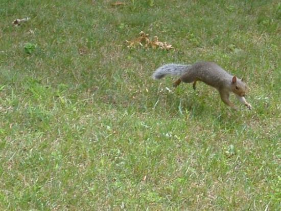 Brooklyn Center, MN: jumping  Squirrel