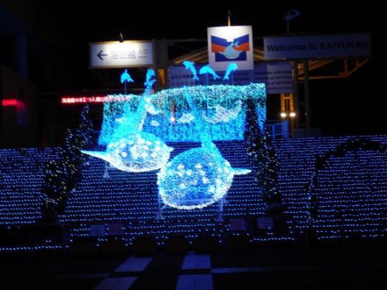 海遊館3 - Picture of Osaka Aquarium Kaiyukan, Osaka - TripAdvisor