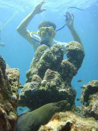 Aloha Ocean Adventures : Viewing the Giant Morray
