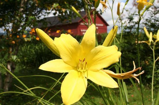 Jeffersonville, VT: Summer flower