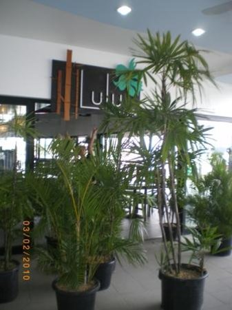Lulu Bar Cafe & Restaurant: the famouse lulus garden.getting better n beutiful day by day