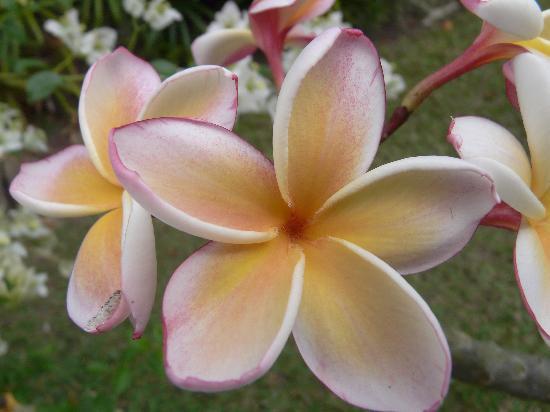 Bueng Pai Farm: Flower in the garden