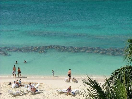 Grand Cayman Marriott Beach Resort: Arificial reef