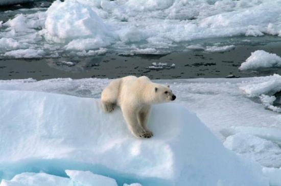Spitsbergen Photo