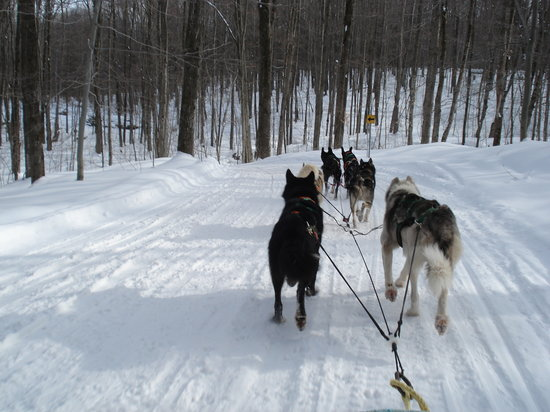 Carriage Hills Resort: DOGSLEDDING ON TRAIL